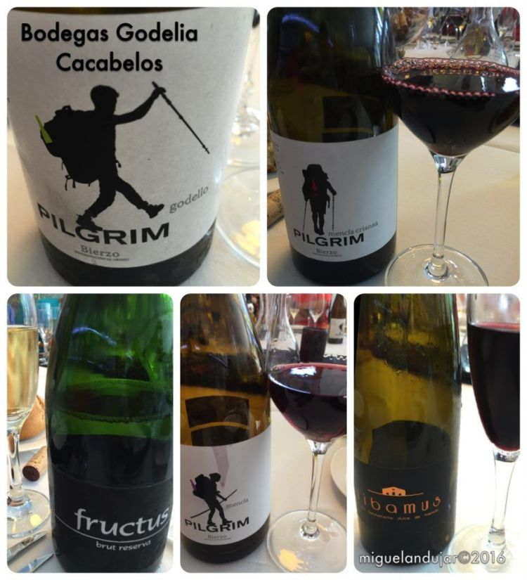 bodegas-godelia-vinos