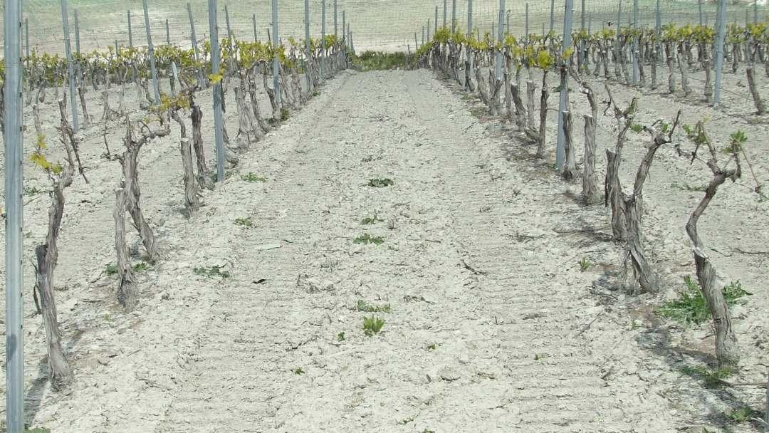 Barros y arenas