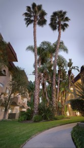 palmtrees_panorama1