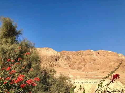 Un camino nuevo... en el desierto!