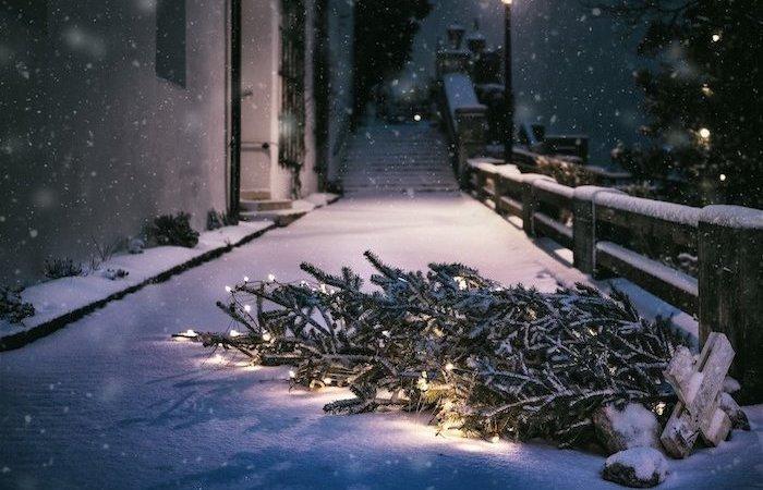 reclamar caída árbol nevada