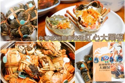 苗栗》台灣紅心大閘蟹 在地無毒養殖 不輸陽澄湖肉質甜又蟹膏滿滿 /可宅配