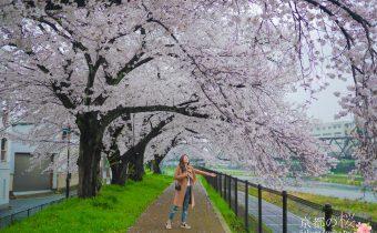 京都賞櫻》九条鴨川櫻花走廊 綿延無止盡的櫻花樹 加映雨天拍櫻花也美秘技