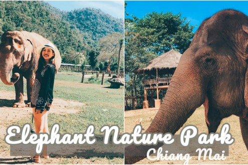 清邁》大象自然公園志工一日遊 致力保護受虐亞洲象Elephant Nature Park