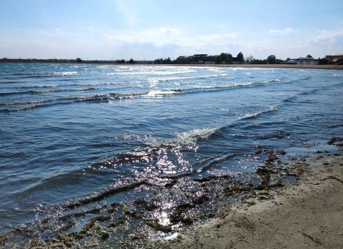 Marea în stare de alertă