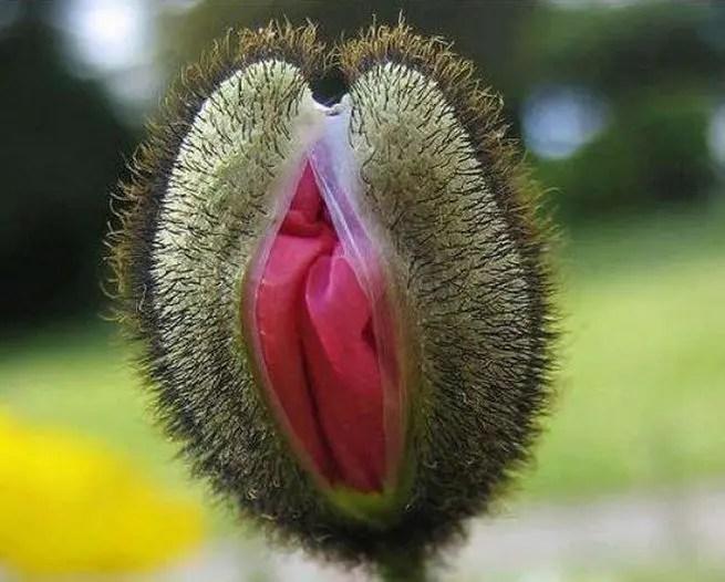 penisul poate fi mărit