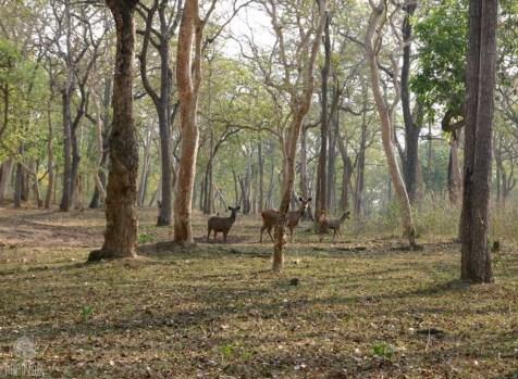 Moving-onto-Mysore2
