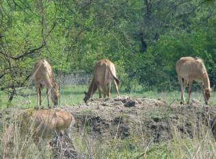 Keoladeo-Ghana-Bird-Sanctuary4
