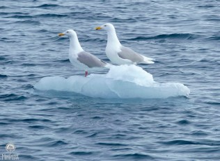 Iceberg5