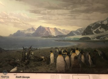 Museum-Animal-kingdom
