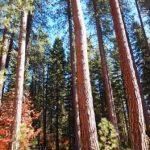 美しい秋のシャスタ ~シャスタの光のシャワーは幸せな時間(マクラウドリバー)~