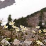 「自然と調和して生きる」~シャスタ山からのメッセージ・私達人間も自然の一部~