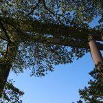修験道・神道・仏教を結ぶ「熊野古道」は世界遺産!3つの聖地は繋がっている!熊野が聖地である由縁とは?