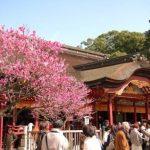 福岡空港から太宰府天満宮のアクセス!バス・電車?令和で人気「坂本八幡宮」はバスが便利!