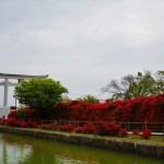 【長岡京つつじ】京都の絶景「真っ赤なキリシマつつじ」