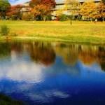 【京都パワースポット賀茂川】紅葉散歩の楽しみ方!深まっていく秋を感じて