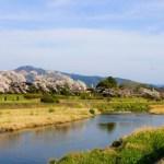 京都のお花見!鴨川の桜!花より団子?おむすび持参?