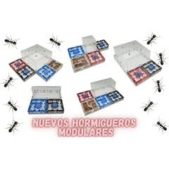 Hormigueros modulares Antmagnet