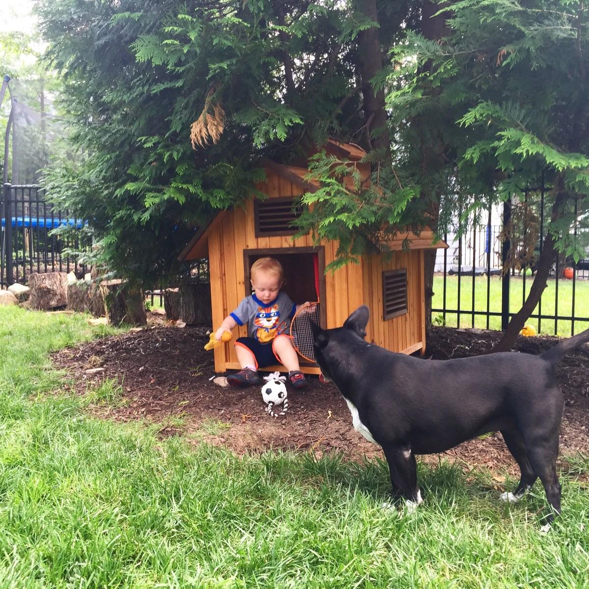 Bella got a doghouse.