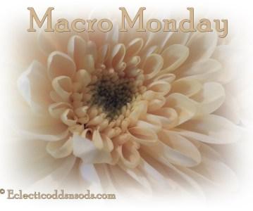 Macro Monday ~ busy as a bee!