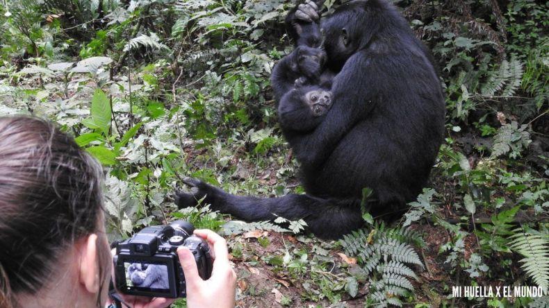 trekking gorilas (18)
