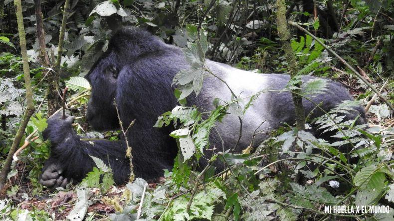 trekking gorilas (24)