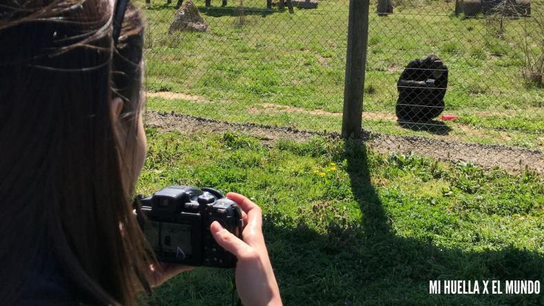 yo de perfil en el lado izquierdo dela foto haciendole una foto a Nico, el chimpancé que tengo apadrinado