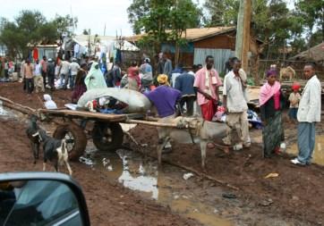Traffic, market day in Ginir town, Oromiya.