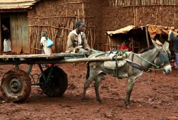 Boy and the donkey cart at Ginir town market, Oromiya.