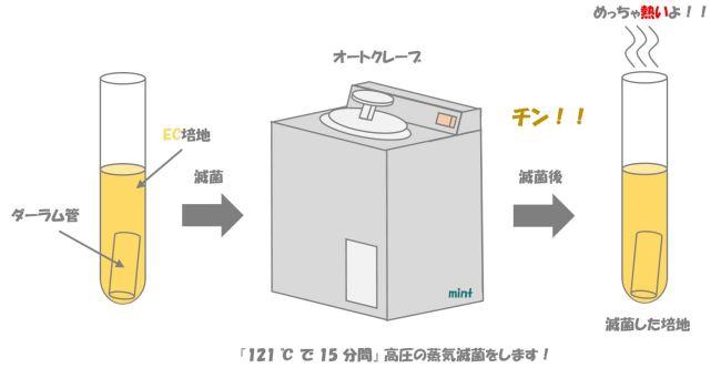 大腸菌の検査①