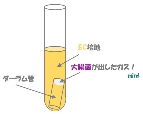 大腸菌の検査④