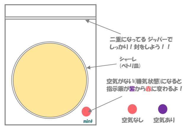 クロストリジウムの検査⑤