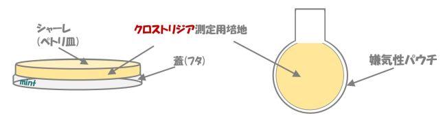 クロストリジウムの検査.⑥
