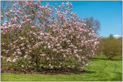 magnolia-2670