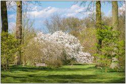 magnolia-2714