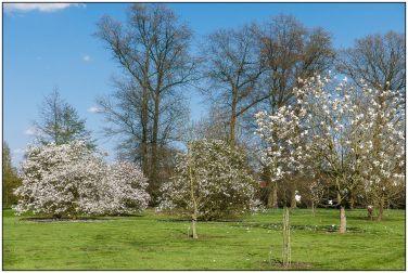 magnolia-2744
