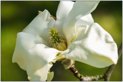 magnolia sundance-2630
