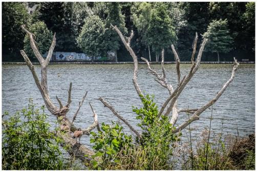 lac de Genval-2