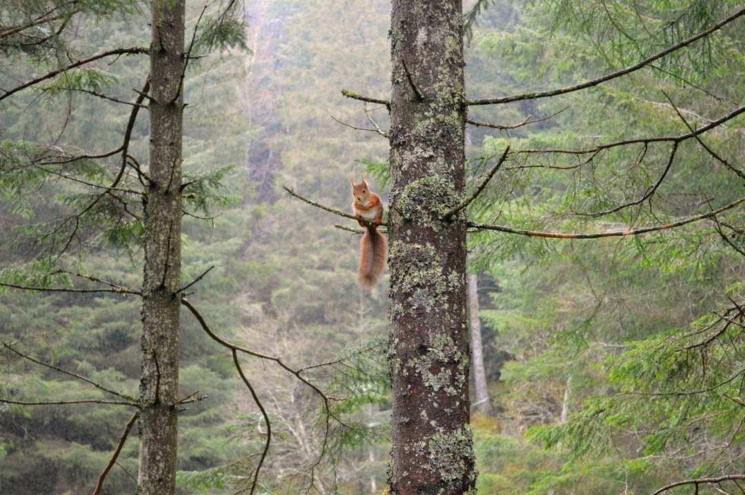Bezienswaardigheden in Bergen eekhoorn