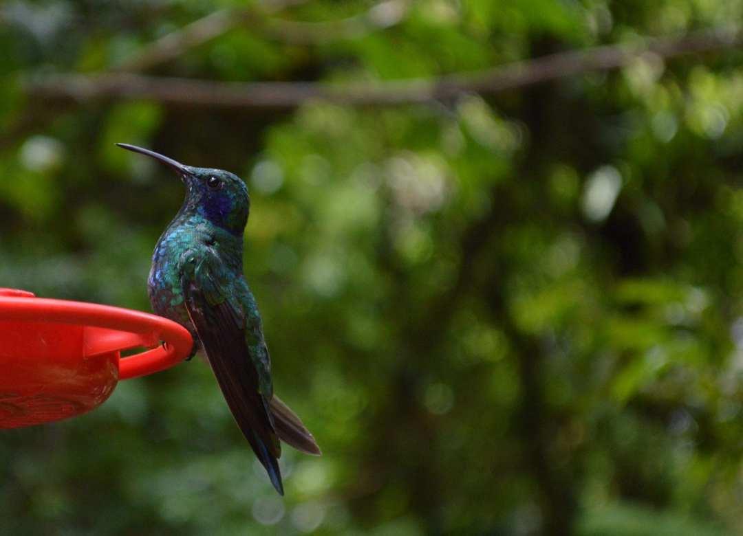 Monteverde cloudforest reserve