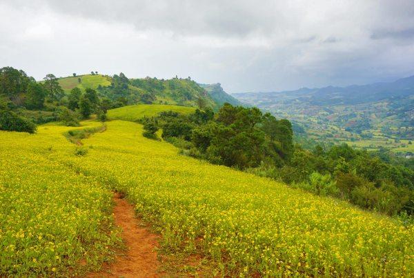 Trekking-bloemen-Myanmar