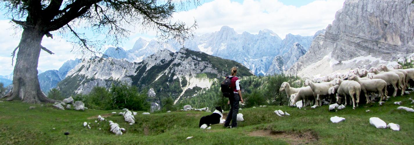 JULISCHE ALPEN EN NATIONAAL PARK TRIGLAV, bron Mijn Slovenië