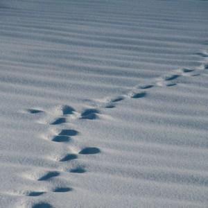 voetstappen, sneeuw