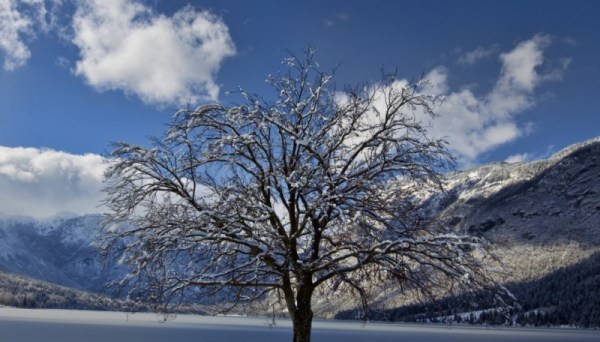 bohinj, winter