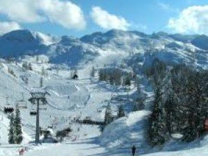 Vogel, skiën, winter, J. van Zoest