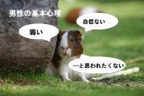 テンジクネズミ