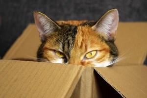 段ボールの中の猫