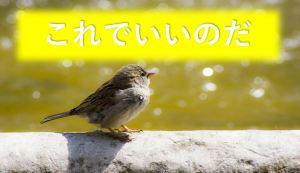 自信のある小鳥