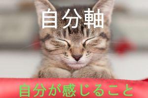自分自身を感じる猫