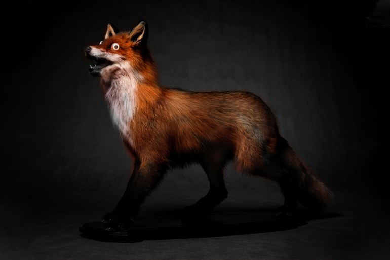 fox_hunter_full